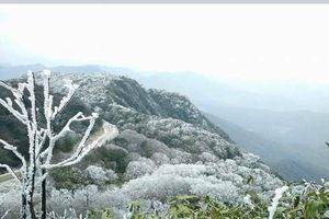 Băng tuyết phủ trắng đỉnh núi Phia Oắc ở Cao Bằng
