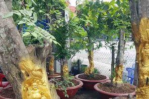 Sốc: Tượng vàng 'ẩn mình' trên thân cây khế già