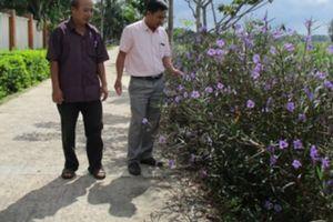 NTM ở Quảng Nam: Quế Cường ngày càng đổi mới và hiện đại