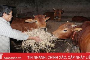 Hà Tĩnh 'giữ ấm, chống đói' cho đàn gia súc, gia cầm trong giá rét