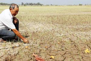 Quảng Trị: Sản xuất nông nghiệp ứng phó với hạn hán và xâm nhập mặn năm 2019