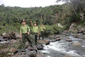 Bắc Giang: Xử phạt 116 vụ vi phạm về quản lý rừng