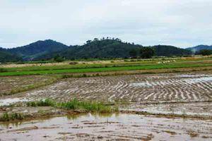 Mưa lũ gây thiệt hại hơn 1.400 ha cây trồng ở Đác Lắc