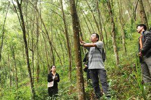Hương Sơn (Hà Tĩnh): Thí điểm cấp chứng chỉ rừng bền vững cho nhóm hộ