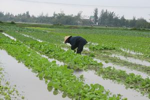 Thừa Thiên Huế: Thiệt hại do không khí lạnh tăng cường