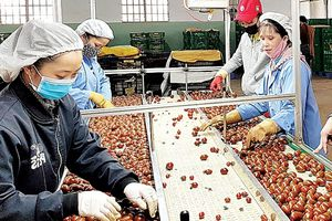 TP Đà Lạt: 'Làm sạch' thị trường nông sản