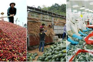 Khoảng 85% sản phẩm nông nghiệp xuất khẩu thô, giá trị thấp