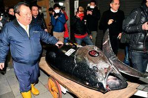 Đại gia 'bạo tay' chi 3,1 triệu USD mua 278 kg cá ngừ, phá vỡ kỷ lục đấu giá tồn tại 6 năm
