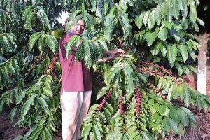 2 lý do khiến xuất khẩu cà phê gặp khó nửa đầu năm