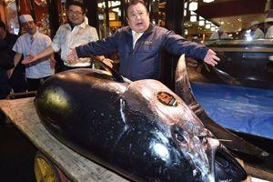 Cá ngừ đại dương 278 ký được bán giá kỷ lục hơn 3 triệu đô