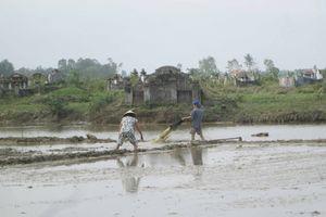 Thừa Thiên Huế: Không khí lạnh, hàng trăm hecta lúa chìm trong biển nước