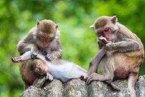 Những thí nghiệm chứng minh động vật cũng có cảm xúc