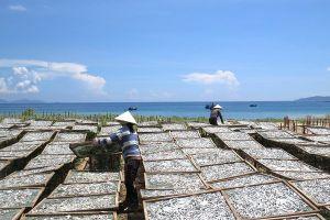 Làng nước mắm nhĩ Phú Yên
