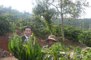 Xuất khẩu cà phê chế biến tăng trưởng tốt