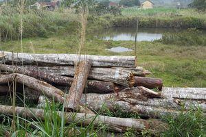 Bảo vệ rừng chặt cây rừng để... cản đường lâm tặc