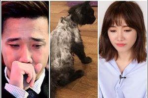 Trấn Thành 'suy sụp' khi nhắc lại ký ức với mèo cưng 3.000 USD
