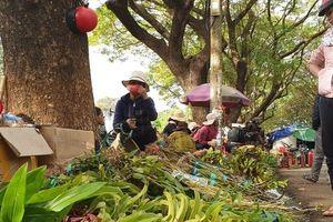 Chợ lan rừng nhộn nhịp 'đón Tết', người dân đổ xô tận diệt loài hoa quý