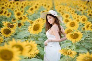 Hot teen Hồng Hạnh khoe vẻ đẹp rạng rỡ giữa 'rừng' hoa hướng dương