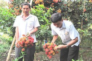 Trung Quốc đã mở cửa chính ngạch thêm cho nhiều loại trái cây Việt Nam?