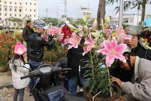 Đà Nẵng đấu giá 164 lô bày bán chợ hoa Tết