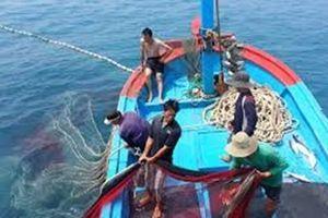 Cấm tàu nhỏ khai thác ven bờ kiểu 'tận diệt' thủy sản