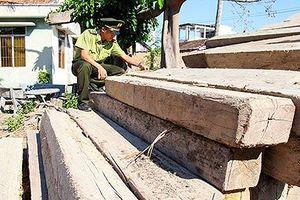 Nhức nhối nạn phá rừng ở Khánh Hòa