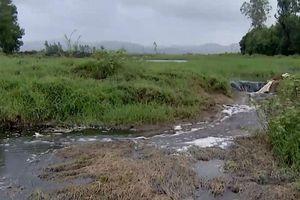 Nước thải ở nhà máy đường Tuy Hòa: Có thông số vượt ngưỡng… 16 lần