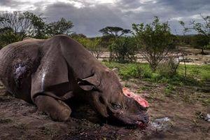 Những loài động vật đang dần biến mất khỏi Trái Đất