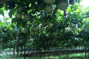 Xuất khẩu chính ngạch 7 loại trái cây Việt vào thị trường tỷ dân