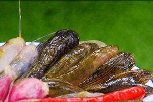 Loài cá bống suối miền A Lưới: Bé tí ti, xấu xí mà 200.000 đồng/kg