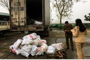 Liên tiếp bắt giữ 2 vụ vận chuyển sản phẩm động vật đang bốc mùi và ma túy