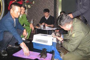 Phát hiện 2 cá thể gấu ngựa đang được mua bán trái phép tại Hải Phòng