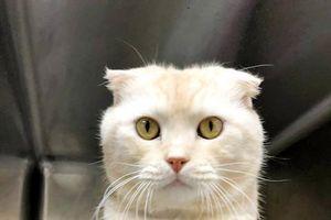 Bỏ rơi mèo, bị phạt tương đương hơn 45 triệu đồng