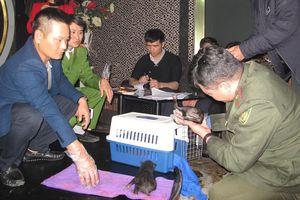Giải cứu 2 cá thể gấu ngựa sơ sinh bị buôn bán tại quán cà phê