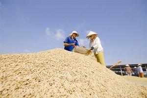 Đầu xuân 'bói quẻ' xuất khẩu gạo