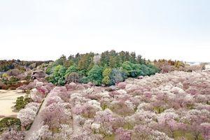 Vẻ đẹp của Ibaraki vào mùa đông