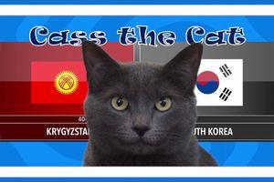 Mèo 'tiên tri' dự đoán kết quả trận Kyrgyzstan vs Hàn Quốc tại ASIAN CUP 2019