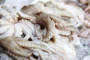 Xuất khẩu mực, bạch tuộc sang Mỹ giảm nhẹ