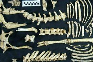 Phát hiện hóa thạch hươu thời tiền sử gần như nguyên vẹn