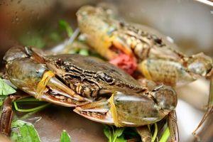 Mẹo chọn cua biển tươi ngon, chắc thịt, các mẹ nên biết