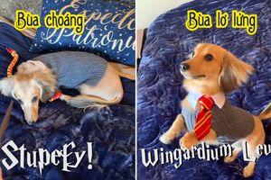 Học sinh đáng yêu nhất Hogwart: Chú chó thuộc lòng các câu thần chú trong Harry Potter