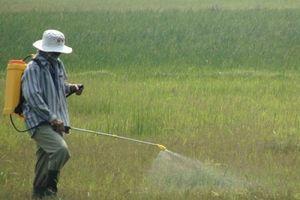 Nhiều nguy hại từ lạm dụng thuốc diệt cỏ