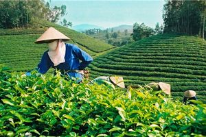 Đẩy mạnh cổ phần hóa nhiều doanh nghiệp nhà nước lĩnh vực nông nghiệp