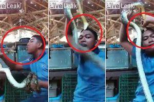 Clip: Dại dột trêu rắn, thanh niên bị rắn chồm lên cắn đầu