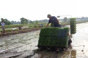 CĐL sản xuất lúa: Mô hình cần nhân rộng