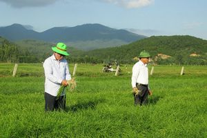 Hành tăm Thiên Lộc cho thu 15 triệu đồng/sào