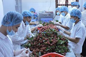 Phát triển công nghiệp chế biến: DN, nông dân cần liên kết