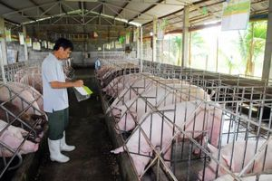 Tập trung phòng chống dịch bệnh gia súc, gia cầm trước, trong và sau Tết Nguyên đán
