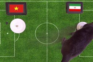 Mèo 'tiên tri' Cass dự đoán sốc kết quả trận Việt Nam vs Iran
