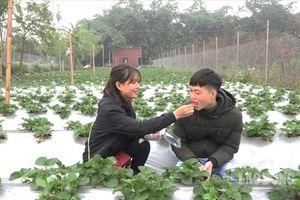 Chẳng cần đến Đà Lạt, Hà Nội cũng có vườn dâu tây hái ăn ngay tại vườn